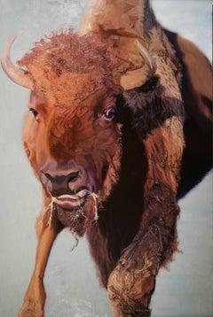 Unkempt Young Buffalo