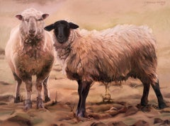 Muddy Sheep