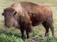 Slovenly Bison