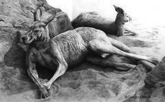 Window refletcs, the kangaroos