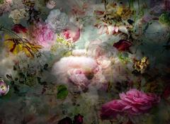Solstice #8 - Floral still lifw contemporary photograph