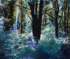 Nadir #1 blue green purple abstract contemporary photography forest and trees
