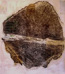 Untitled (Douglas Fir, estimated age 231 years)
