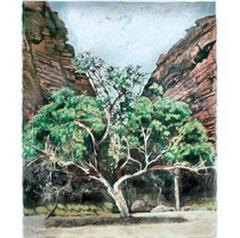 Gum Tree in Alice Springs, Original, Landscape, Signed, Exemplary Art Reviews
