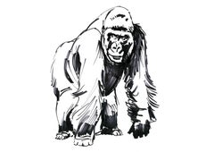 Love me Save Me, GORILLA; portion of proceeds benefit WWF, signed and dedicated
