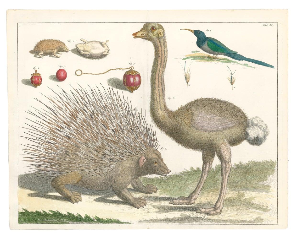 Ostrich, Porcupine and Hedgehog Engraving