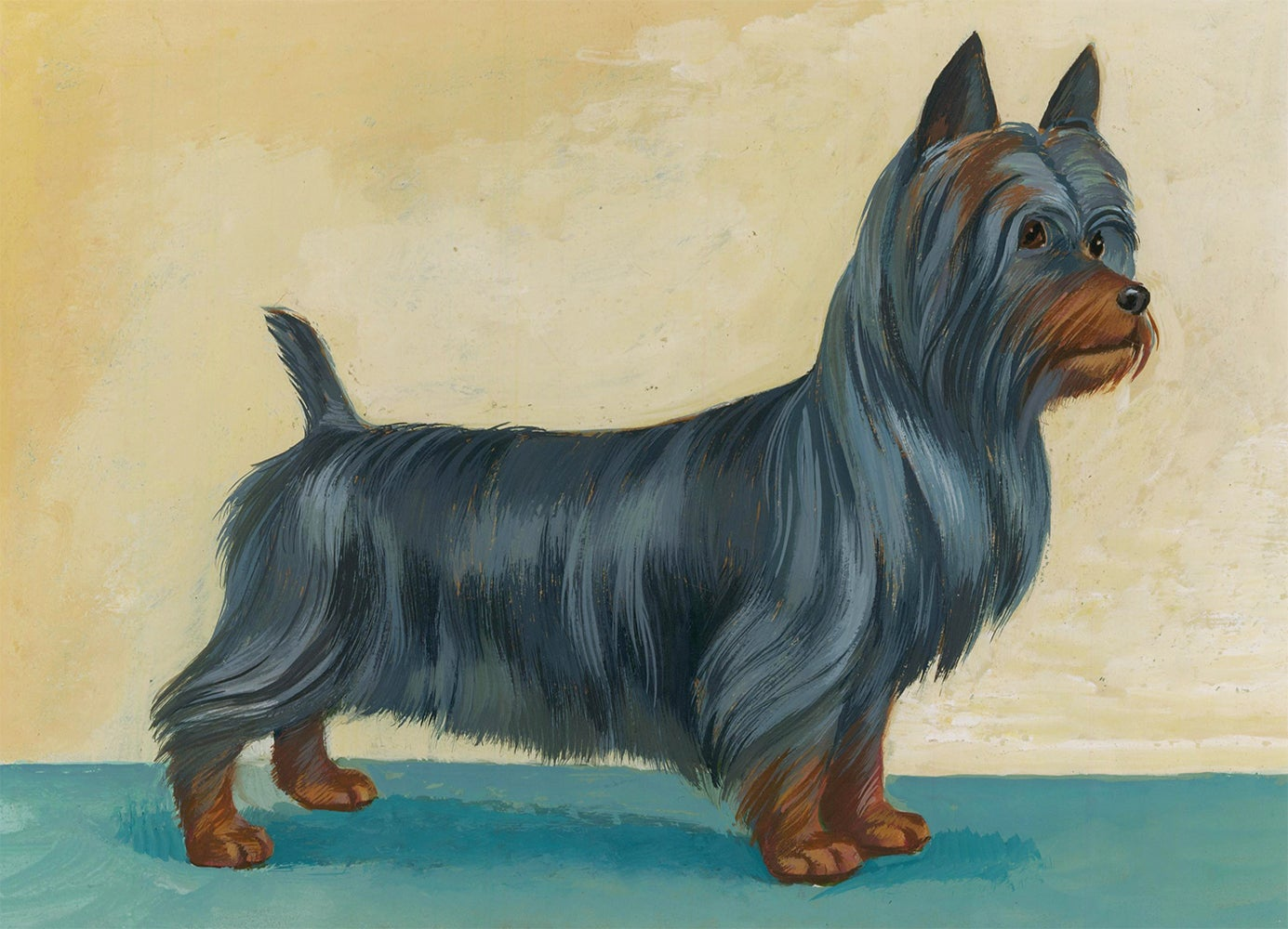 Silky Terrier Painting