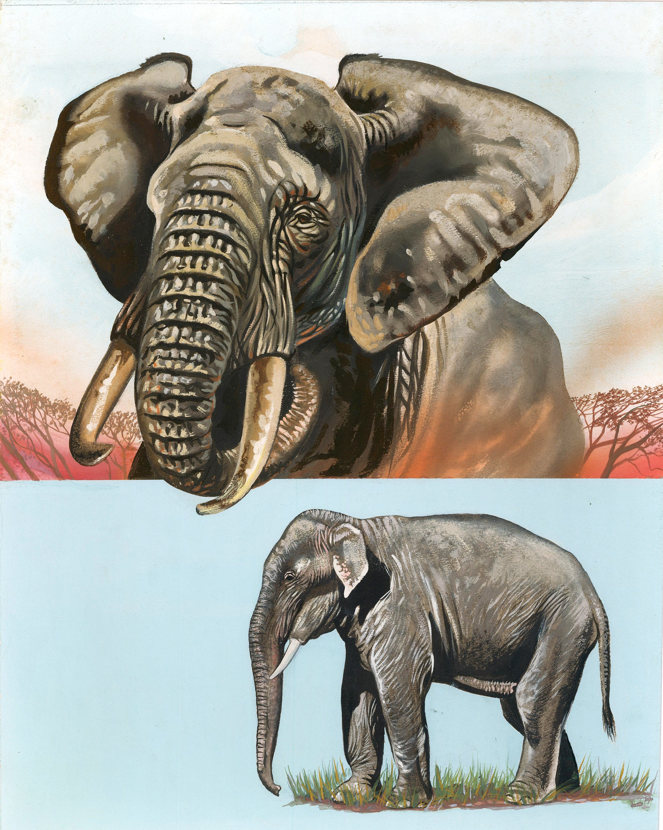 African & Indian Elephant Painting