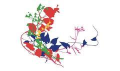 florilegium SW7