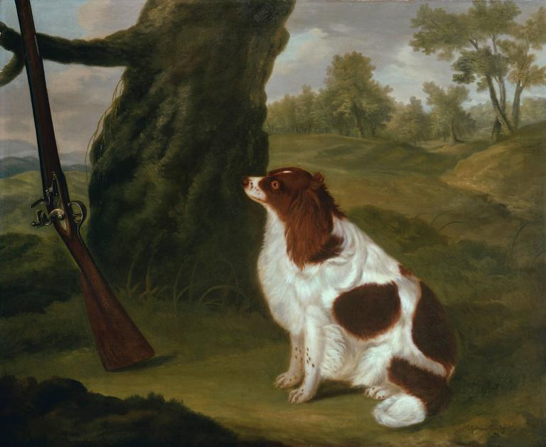 A liver and white spring spaniel sitting by a tree against which leans a flintlo