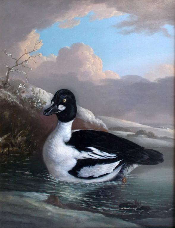 Robert Wilkinson Padley Animal Painting - Three Ducks: A Goldeneye (Bucephala clangula); a brace of Teal (Anas crecca) and