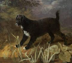 """A portrait of the black and white English Water-spaniel """"Tim"""" standing by a pond"""
