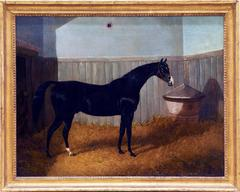 A black thoroughbred horse in a stable