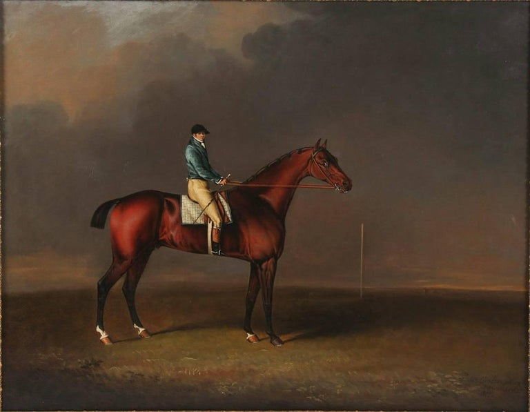 Sir David, a Bay Racehorse owned by H. R. H. The Prince of Wales For Sale 1