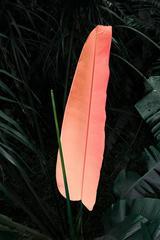 'Pink' Elsa Leydier Limited Edition