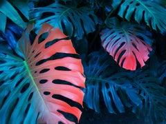 'Rainbow Leaf' Elsa Lydier Limited Edition