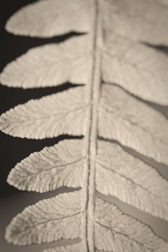 'Fern'   Oversize Archival Pigment Print - Signed Limited Edition