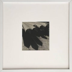 Abstract - Framed B&W Photography