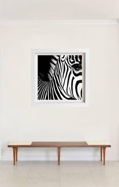 Zebra Half Angels Half Demons #26 B&W Photograph