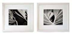 The Leaf and Two Leaves Diptych- B&W Nature Photography Framed