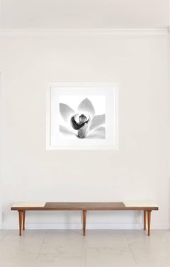 Orchid- B&W Nature Photography Framed