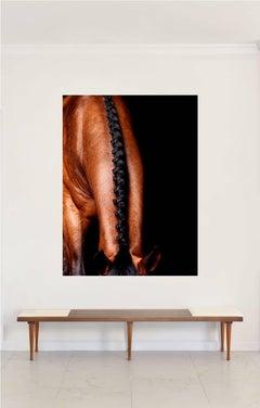 'Lamerick Neck'- Horse Series Color Photograph