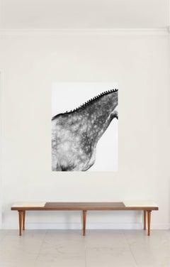 'Volvan Neck II'- Horse Series Color Photograph