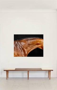 'Orbetello Neck'- Horse Series Color Photograph