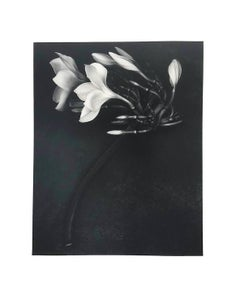 Orchid,  St. John, US. Virgin Islands April 1988