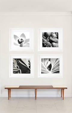 Quadriptych - B&W Nature Photography- Framed