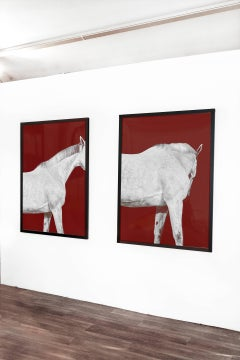 Tixie on Red I and II, Horse Portrait Series Color Photograph