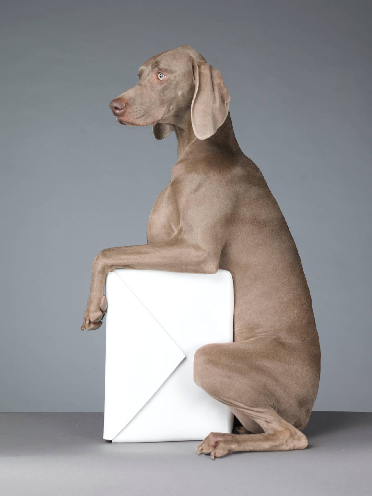 W.s.h. Weimaraner William Wegman - The L...
