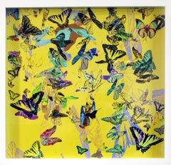 Flutter - B