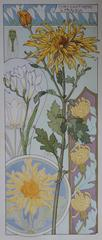 C RIOM : Chrysanthemums And Freesias - Original Lithograph - Art Nouveau 1890s