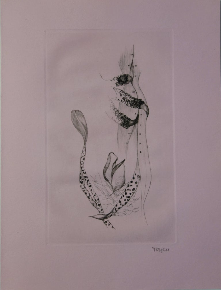 Wild Dream - Original handsigned etching, 1967