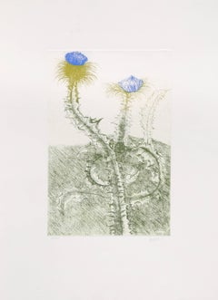 Thistle, Drypoint Etching in Colors by Leonard Baskin
