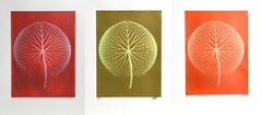 Set of 3 Giant Amazon Waterlily Floral Photographs by Jonathan Singer