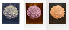Set of 3 Peony Floral Photographs by Jonathan Singer