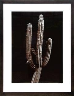 Saguaro Cactus, Still Life Photograph by Jonathan Singer