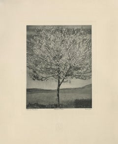 """Cherry Tree in Bloom"" Copper Plate Heliogravure"