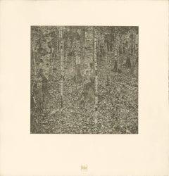 """H.O. Miethke Das Werk folio """"Birch Forest I"""" collotype print"""