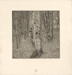 "H.O. Miethke Das Werk folio ""Beech Forest II"" collotype print"