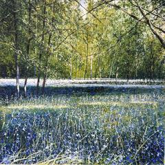 Shadows, Blue Bell Wood