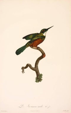 Jacques Barraband, Le Jacamar male. No. 47, engraving, 1806
