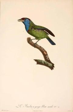 Jacques Barraband, Le Barbou a gorge bleue male. No. 21, engraving, 1806