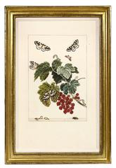 Jacob L'Admiral, Set of Six Insects, copper engraved plates, 1774