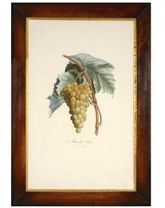Pierre Antoine Poiteau, A set of Four Grapes, stipple engraving, 1807-1835.