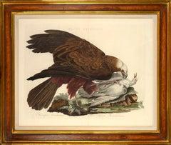 MILVI ÆRUGINOSUS , from Nederlandsche Vogelen.
