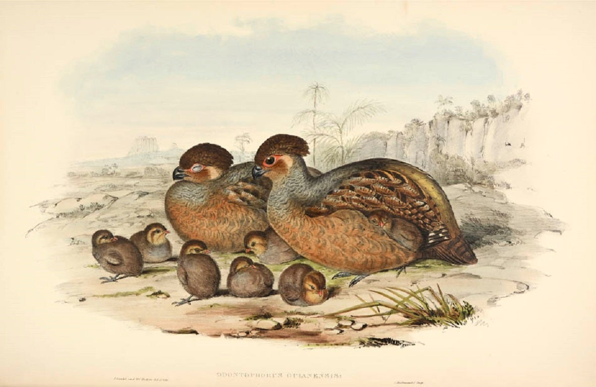 A monograph of the odontophorinae, or partridges of America. 4