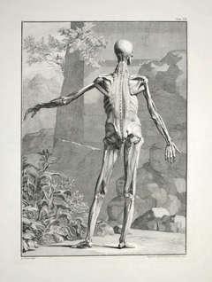 [Anatomical Studies].